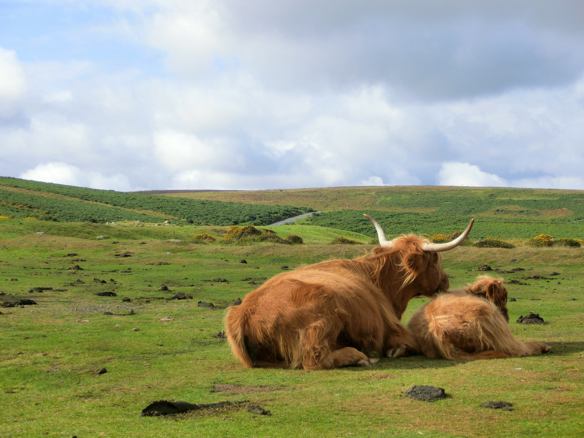 Things to do on Dartmoor - see the wild animals